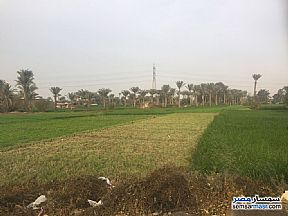 Ad Photo: Farm 15 kirat in Badrashin  Giza