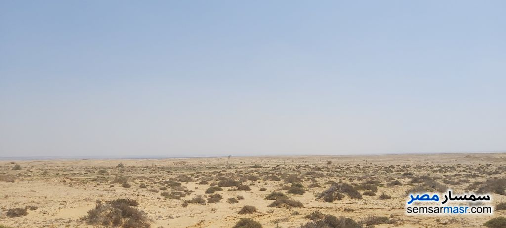 Ad Photo: Farm 540 acre in Wadi Al Natrun  Buhayrah