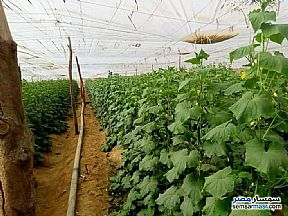 Ad Photo: Farm 50 acre in New Asyut  Asyut