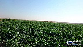 Ad Photo: Farm 223 acre in Al Edwah  Minya