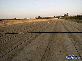Ad Photo: Farm 24000 sqm in Badr  Buhayrah
