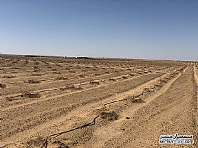 Ad Photo: Farm 10000 acre in El Alamein  Matrouh