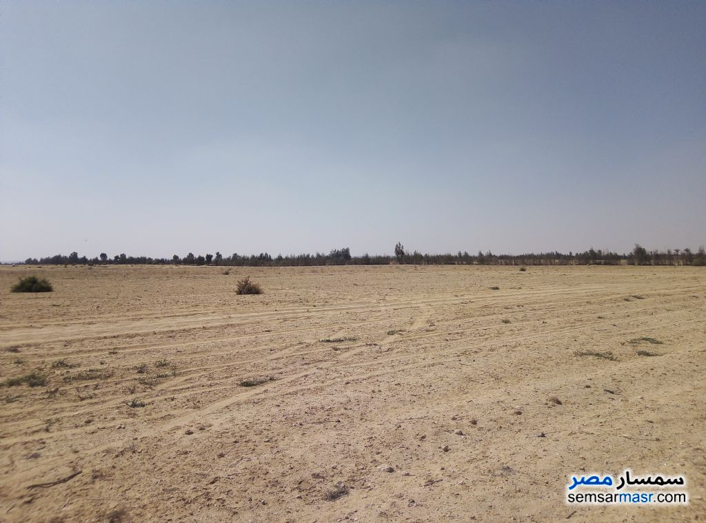 Photo 1 - Farm 25 acre For Sale Wadi Al Natrun Buhayrah