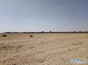 Ad Photo: Farm 25 acre in Wadi Al Natrun  Buhayrah