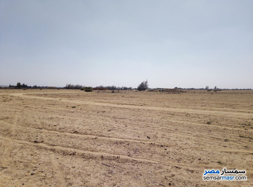 Photo 2 - Farm 25 acre For Sale Wadi Al Natrun Buhayrah