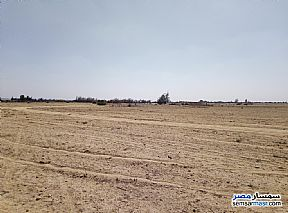 Farm 25 acre For Sale Wadi Al Natrun Buhayrah - 2