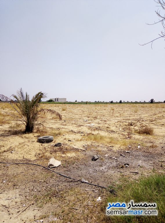 Photo 3 - Farm 25 acre For Sale Wadi Al Natrun Buhayrah