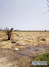 Farm 25 acre For Sale Wadi Al Natrun Buhayrah - 3