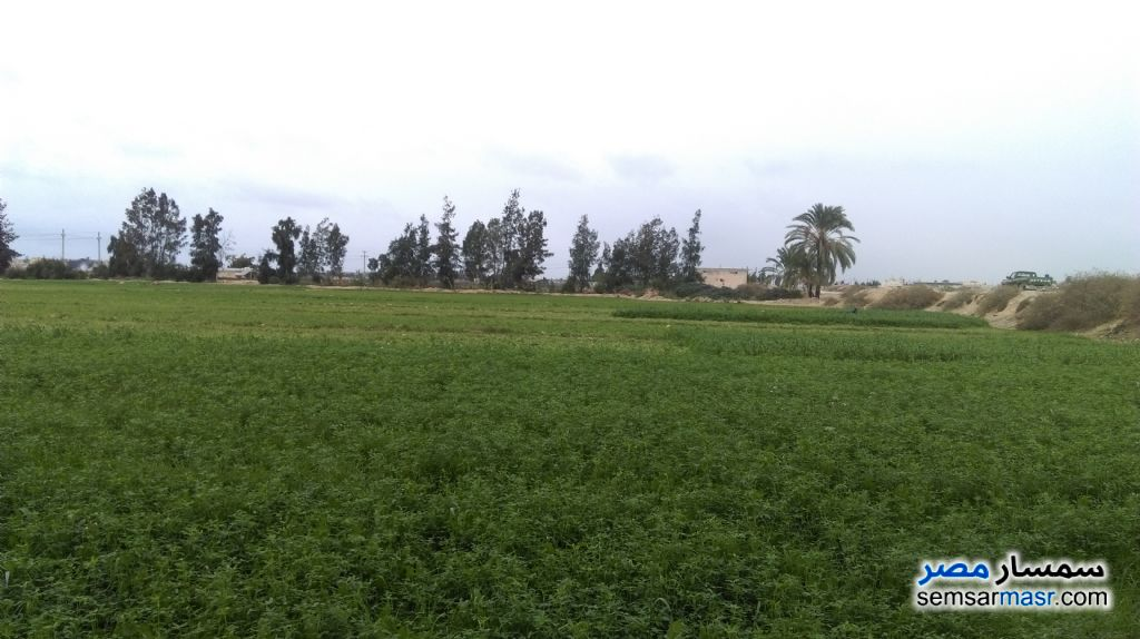 Ad Photo: Farm 20 acre in Borg Al Arab  Alexandira