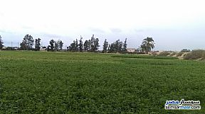 Farm 20 acre For Sale Borg Al Arab Alexandira - 1