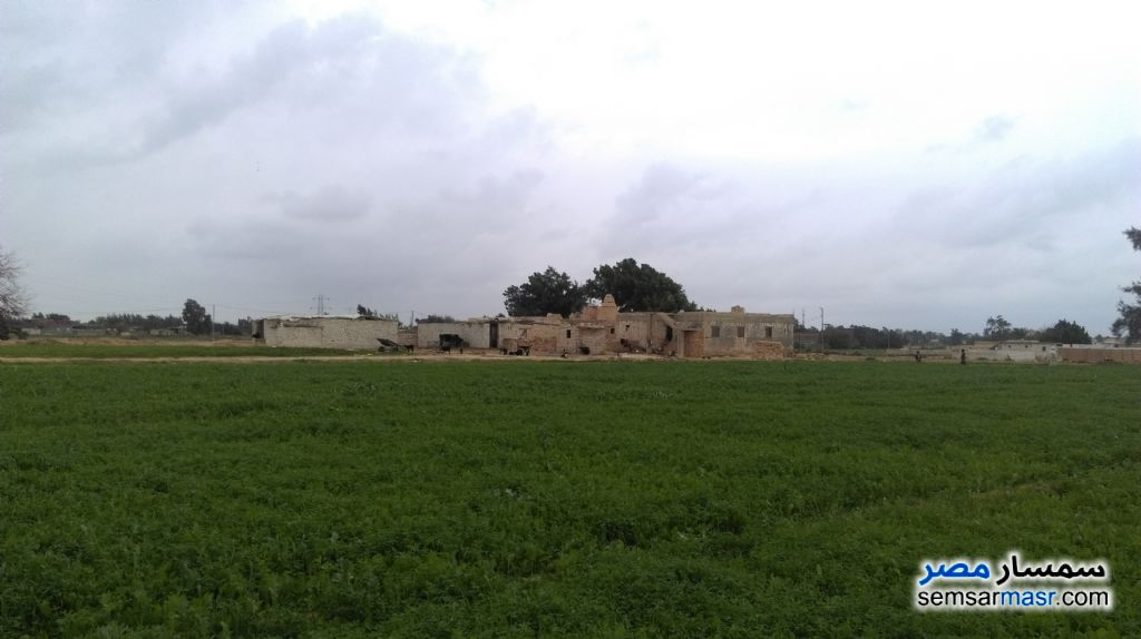 Photo 3 - Farm 20 acre For Sale Borg Al Arab Alexandira