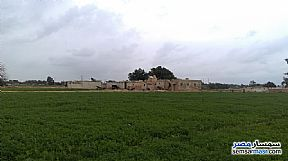 Farm 20 acre For Sale Borg Al Arab Alexandira - 3