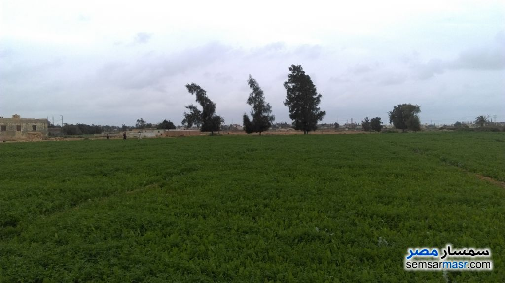 Photo 4 - Farm 20 acre For Sale Borg Al Arab Alexandira