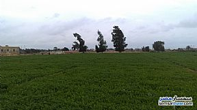 Farm 20 acre For Sale Borg Al Arab Alexandira - 4