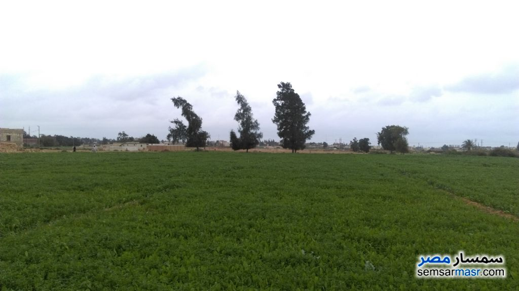 Photo 5 - Farm 20 acre For Sale Borg Al Arab Alexandira