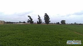 Farm 20 acre For Sale Borg Al Arab Alexandira - 5