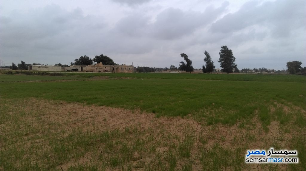 Photo 6 - Farm 20 acre For Sale Borg Al Arab Alexandira
