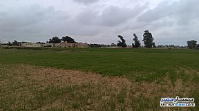 Farm 20 acre For Sale Borg Al Arab Alexandira - 6
