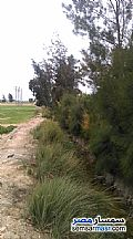 Farm 20 acre For Sale Borg Al Arab Alexandira - 7