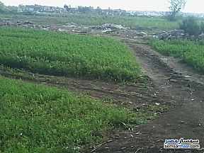 Ad Photo: Land 150 sqm in Mansura  Daqahliyah