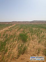 Ad Photo: Farm 5 acre in Bahariya Oasis  Giza