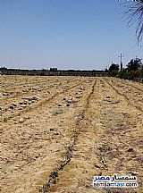Ad Photo: Farm 15 acre in Wadi Al Natrun  Buhayrah