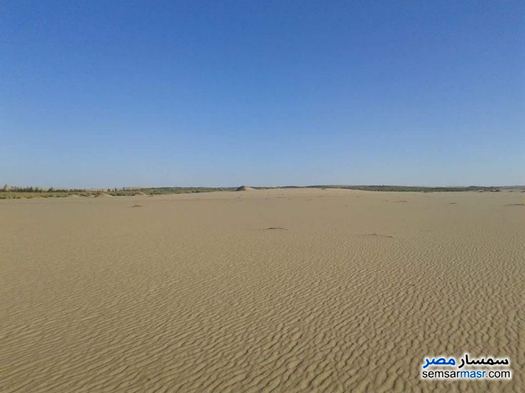 Photo 2 - Farm 100 acre For Sale Siwa Matrouh