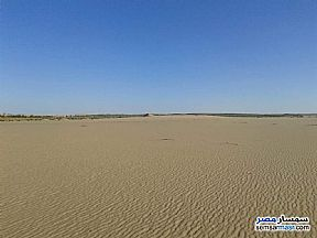Farm 100 acre For Sale Siwa Matrouh - 2