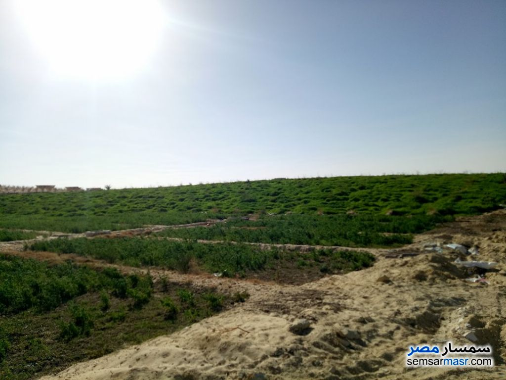 Photo 3 - Farm 100 acre For Sale Siwa Matrouh
