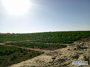Farm 100 acre For Sale Siwa Matrouh - 3