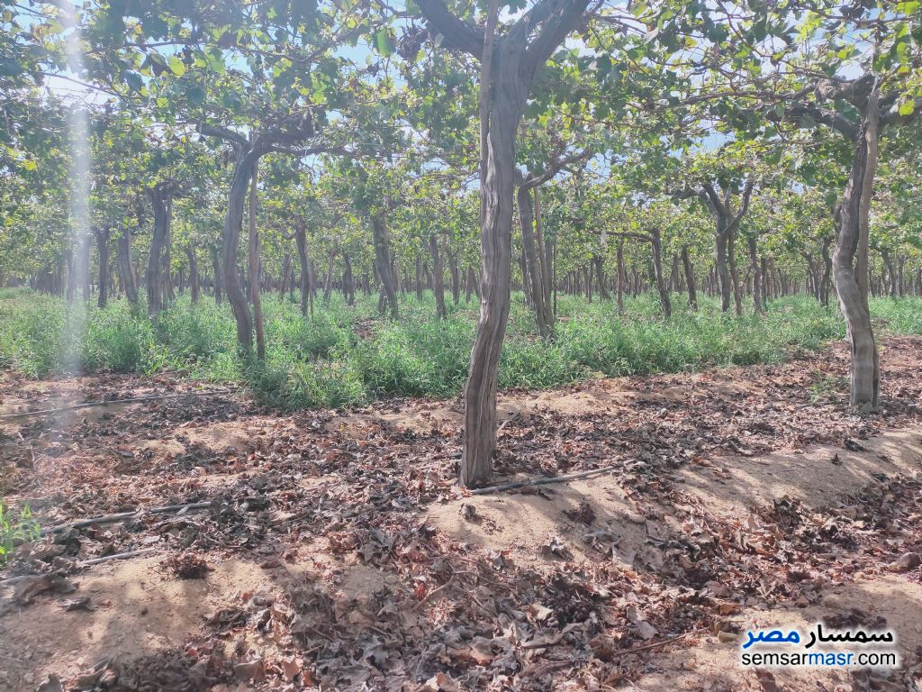 Ad Photo: Farm 4 acre in Badr  Buhayrah