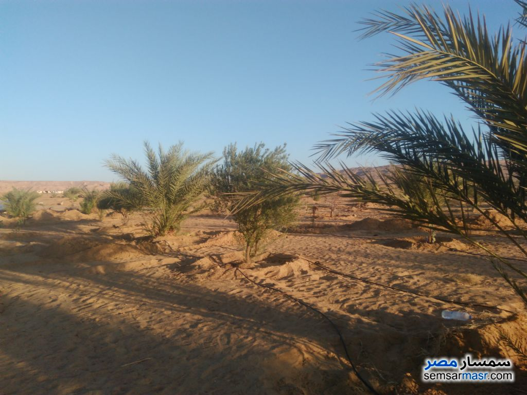 Photo 1 - Farm 140 acre For Sale Bahariya Oasis Giza