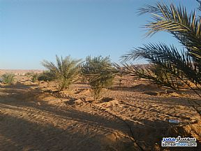 Ad Photo: Farm 140 acre in Bahariya Oasis  Giza