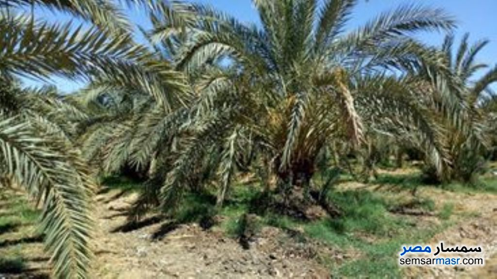 Photo 1 - Farm 20 acre For Sale Bahariya Oasis Giza