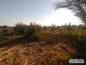 Ad Photo: Farm 160 acre in Bahariya Oasis  Giza