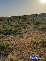Farm 40 acre For Sale Tamiya Fayyum - 6