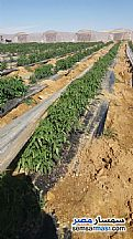 Farm 40 acre For Sale Tamiya Fayyum - 1