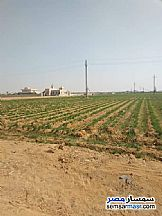 Farm 40 acre For Sale Tamiya Fayyum - 2
