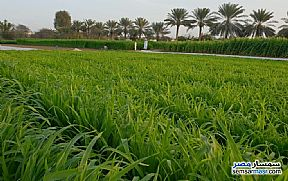Ad Photo: Farm 4 acre in Amereyah  Alexandira
