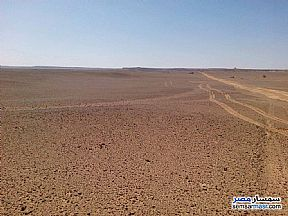 Ad Photo: Farm 25 acre in Siwa  Matrouh