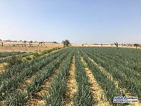 Ad Photo: Farm 30 acre in New Asyut  Asyut