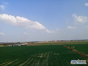 Ad Photo: Farm 13 acre in Bilbeis  Sharqia