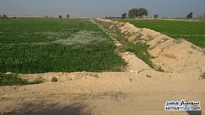 Ad Photo: Farm 7 acre in Borg Al Arab  Alexandira