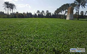 Ad Photo: Farm 10 acre in Borg Al Arab  Alexandira