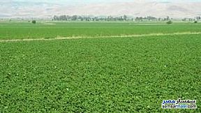 Ad Photo: Farm in Minat Al Nasr  Daqahliyah