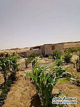 Ad Photo: Farm 20 acre in Egypt
