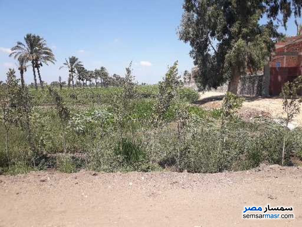 Photo 1 - Farm 25 acre For Sale Sinbillawain Daqahliyah