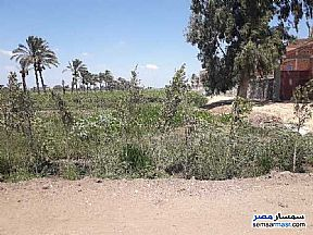 Ad Photo: Farm 25 acre in Sinbillawain  Daqahliyah