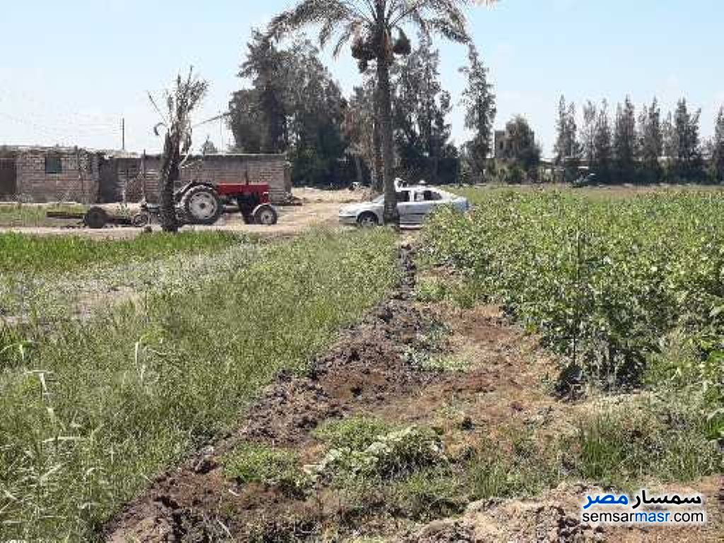 Photo 4 - Farm 25 acre For Sale Sinbillawain Daqahliyah