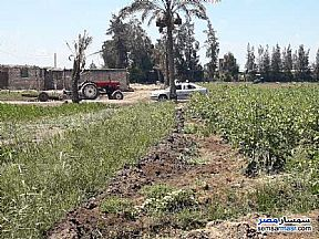 Farm 25 acre For Sale Sinbillawain Daqahliyah - 4
